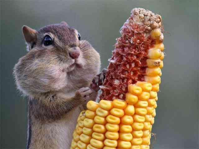 食べる!動物の画像