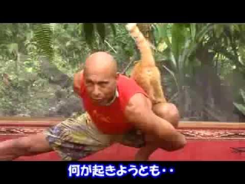 猫乱入ヨガ - YouTube