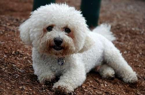 アメリカ50州それぞれで最も愛されている犬…日本の2犬種も