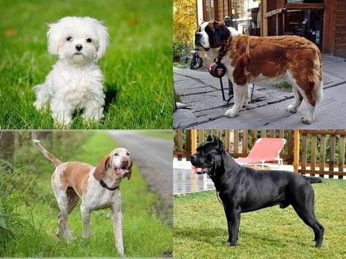 アメリカ50州それぞれで最も愛されている犬…日本の2犬種も:らばQ