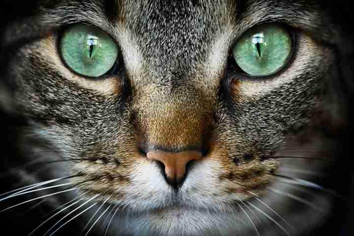 「何か来るにゃ...」 大阪地震の瞬間の猫動画に海外が注目 アメリカでは19世紀から軍で研究も   ワールド   for WOMAN   ニューズウィーク日本版 オフィシャルサイト