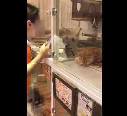 仙台のペットショップが仔猫をわしづかみにして揺さぶるなどの虐待…客が動画撮影し告発、企業側が謝罪