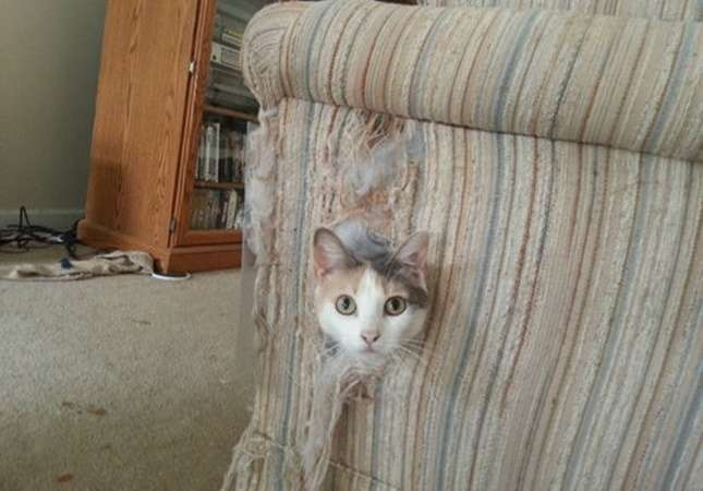 こんなところに猫が!って画像を貼っていくトピpart2