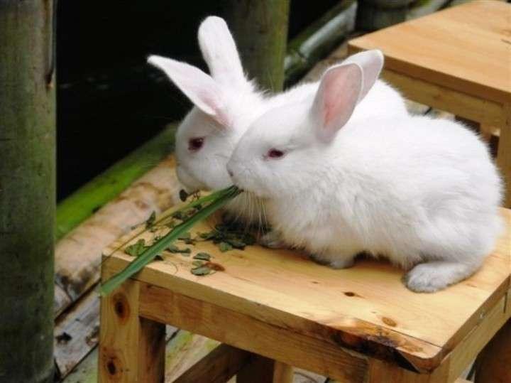 大切に飼っていたウサギが脱走、110番して見つかるもすでに「...|レコードチャイナ