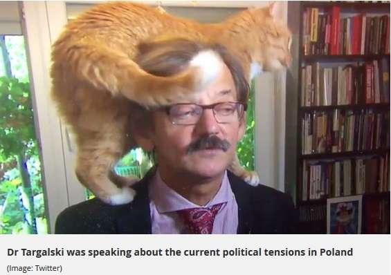 【海外発!Breaking News】深刻な政治問題のTVインタビュー中、飼い猫まさかの乱入(ポーランド)<動画あり> | Techinsight(テックインサイト)|海外セレブ、国内エンタメのオンリーワンをお届けするニュースサイト