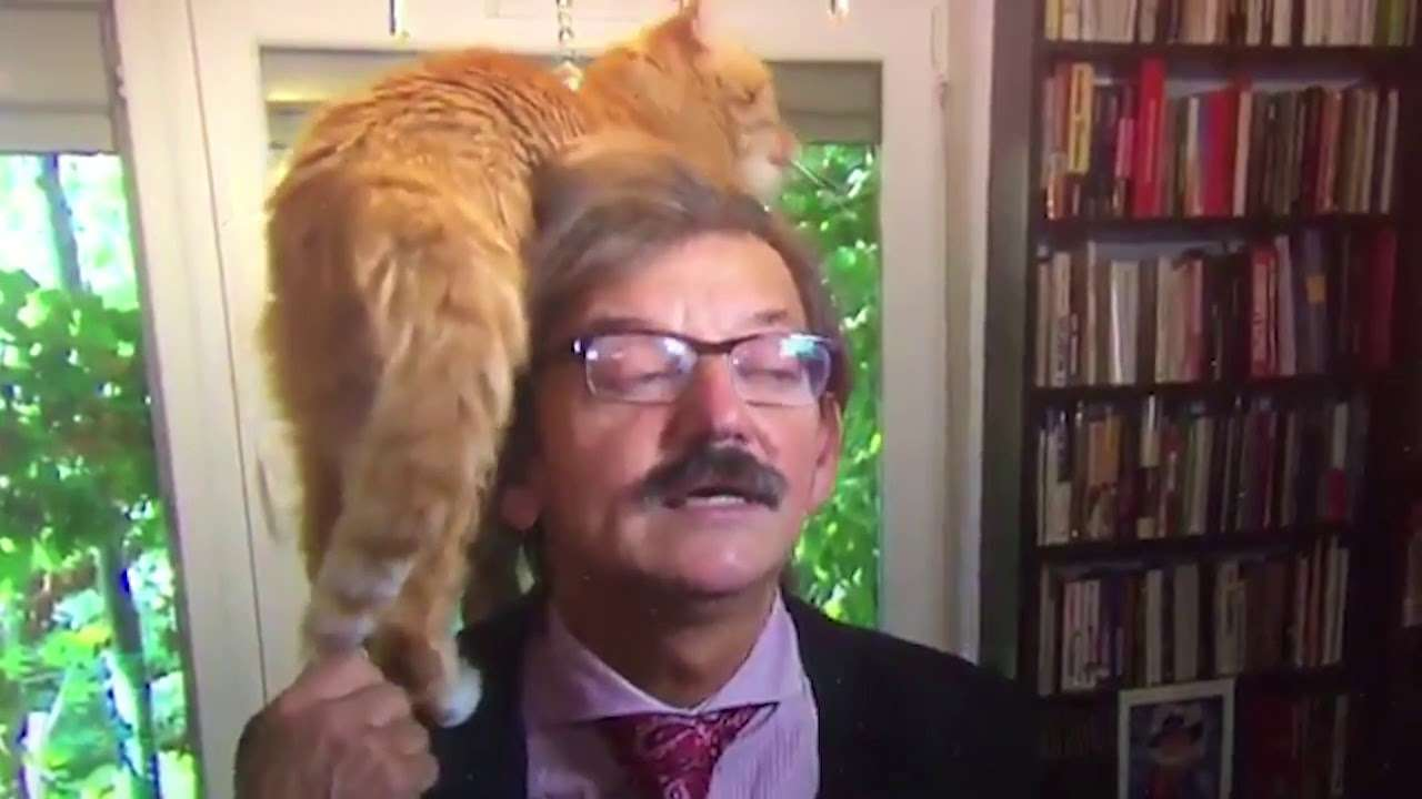 Cat steals the show during live TV interview with Polish academic - YouTube