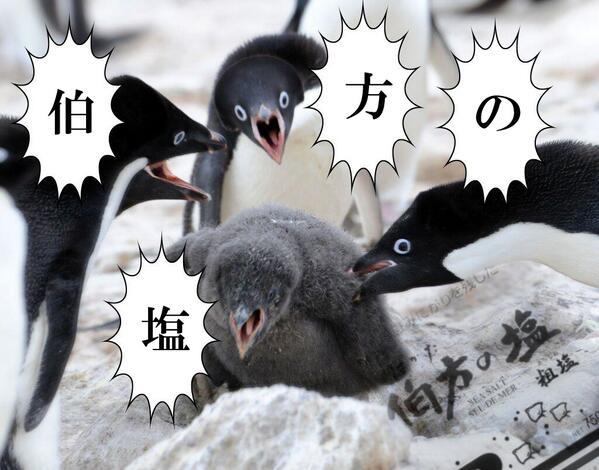 【定期】は!か!た!の!しお!のリズムで話すトピ