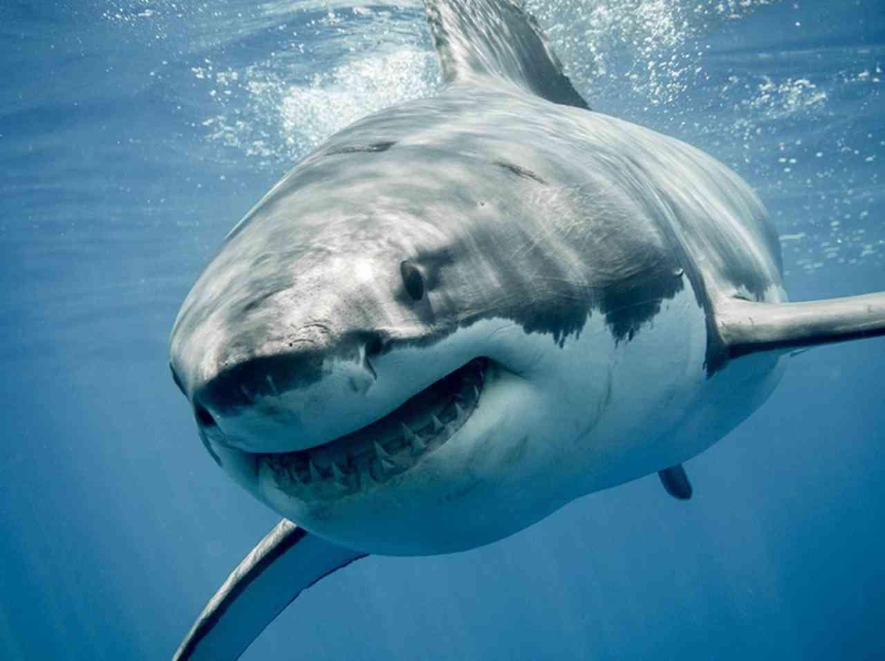女性インスタグラマー、SNS用写真を撮影中にサメに襲われる【写真あり】 - FRONTROW