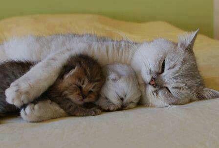 動物の親子画像で癒されたい