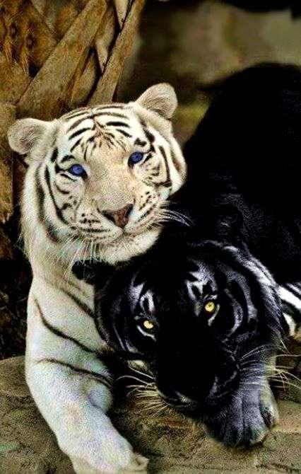 動物で写真集を作るトピ