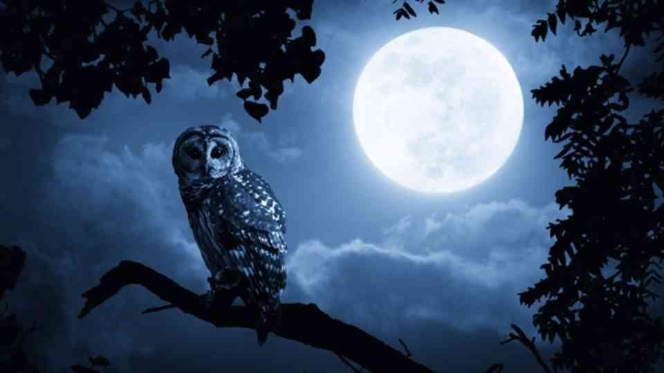 夜な夜な雑談トピ