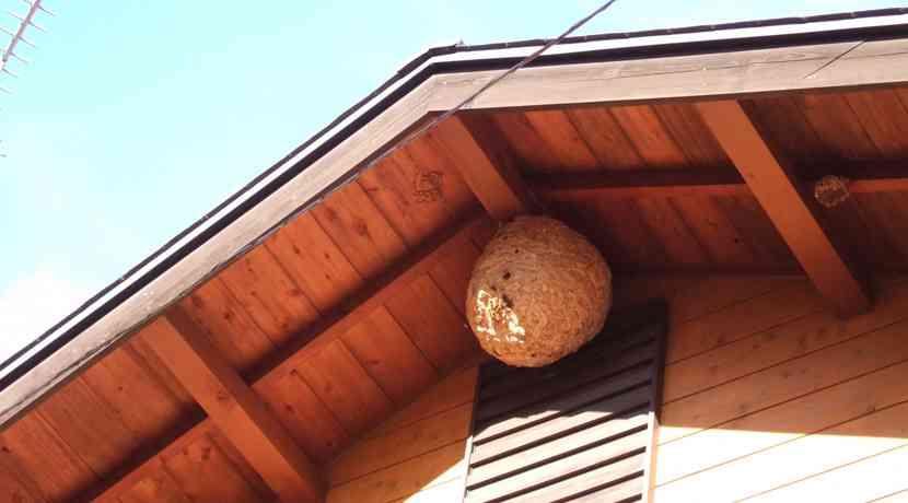 【害虫対策】蜂(ハチ)は木酢液(もくさくえき)が効果的!自宅の庭やベランダにスズメバチを寄せ付けない方法とは | 節約大全