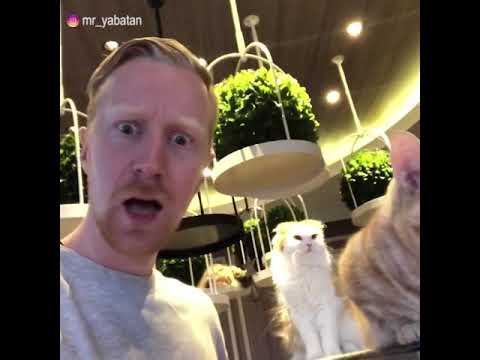 Foreigner discovers cat cafe!