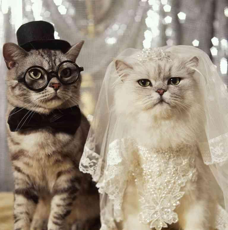 他人の結婚式は迷惑ですか?