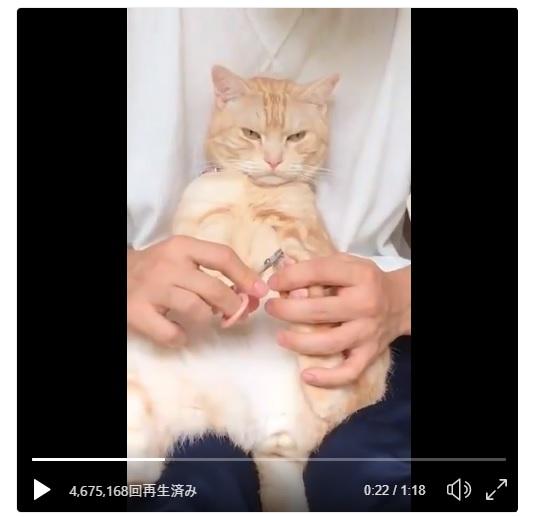羨ましい…猫飼いなら皆憧れる「おとなしく爪を切られる猫」
