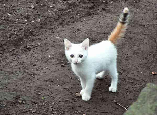 ちょっと珍しい柄の猫画像