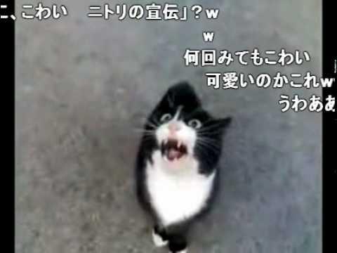 怒ってた猫が急に話しかけて来たけど、ネコ語だからわからない、コメ付 - YouTube