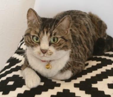え?これ作り物?? 羊毛フェルトで作った猫に驚嘆 | おたくま経済新聞