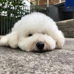 僕とシッポと神楽坂【公式】 (@shippo_daikichi) • Instagram photos and videos