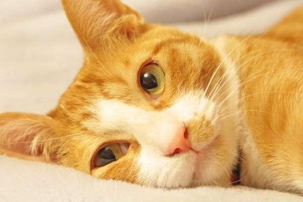 「猫の里親募集する団体にげんなり」里親希望者の深いため息 猫を自分の承認欲求満たすために利用「まともな団体あるなら教えて」   キャリコネニュース