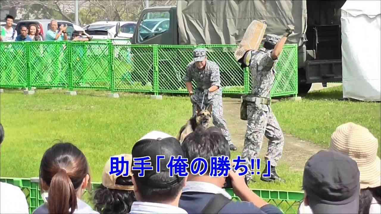 2016芦屋基地航空祭 警備犬vs訓練士バトル - YouTube