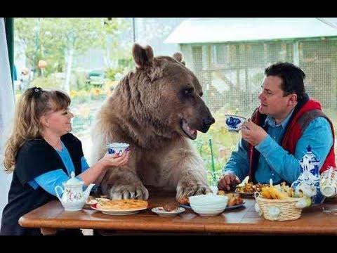 ロシア人夫婦と共に暮らす熊。 その姿がまるでぬいぐるみようで・・・ - YouTube