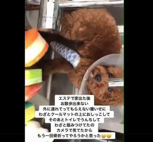 飼い主が投稿した犬の「虐待」動画 拡散きっかけで無事保護
