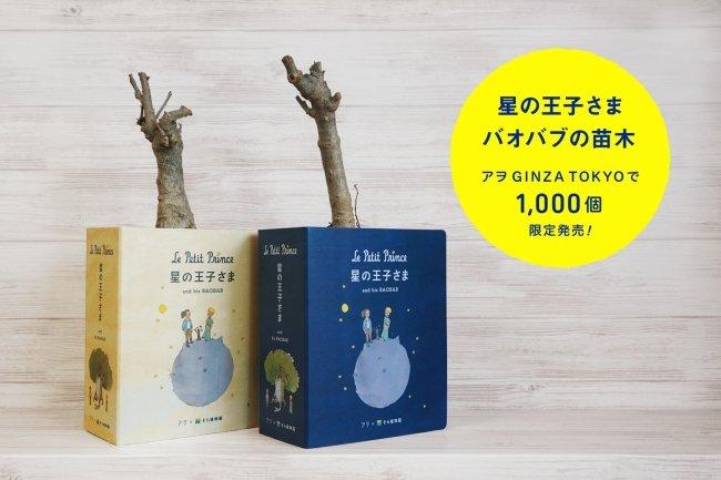 プラントハンター西畠清順氏、『星の王子さま』に自分を登場させる続編を制作→バオバブの苗木とセットにして売り出す