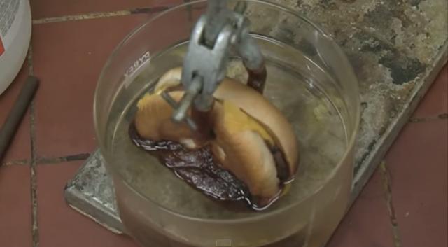 【衝撃】チーズバーガーは胃の中でエラいことになっていた【動画あり】 - macaroni