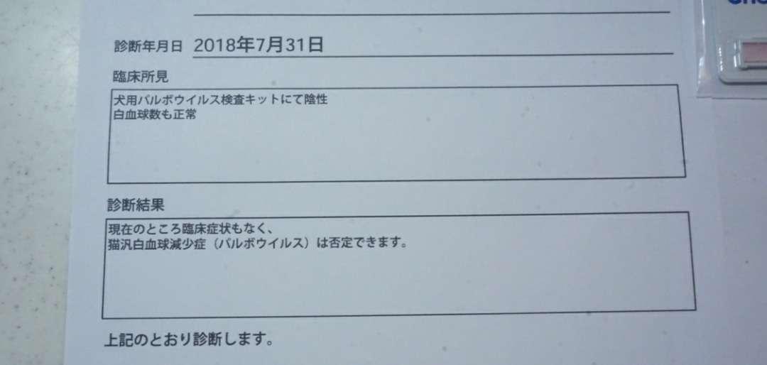 昨日のパルボ検査について | 東京都 メインクーン専門キャッテリー  PureJewel BLOG