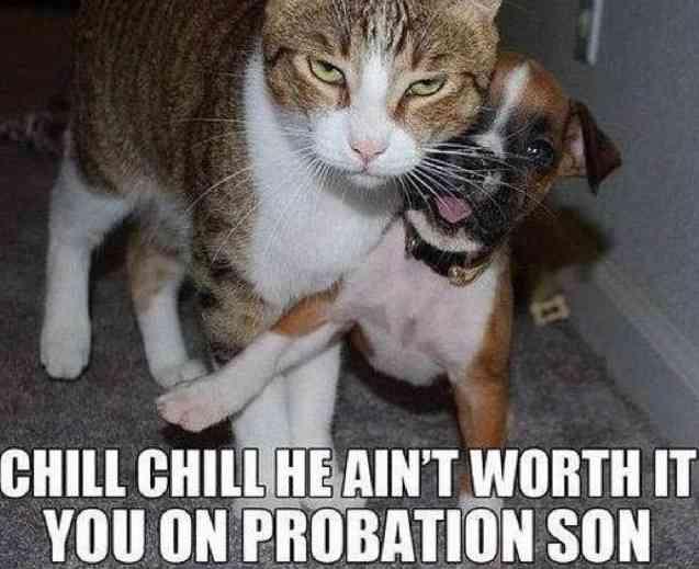 猫にケンカを挑もうとした猫、犬により強制退場