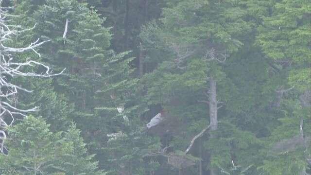 長野県境で機体の破片か 不明のヘリか警察や消防が確認中 | NHKニュース
