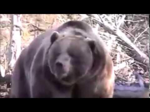 【驚愕】【恐怖】ヒグマの怖さを体感 驚愕動画 HIGUMA - YouTube