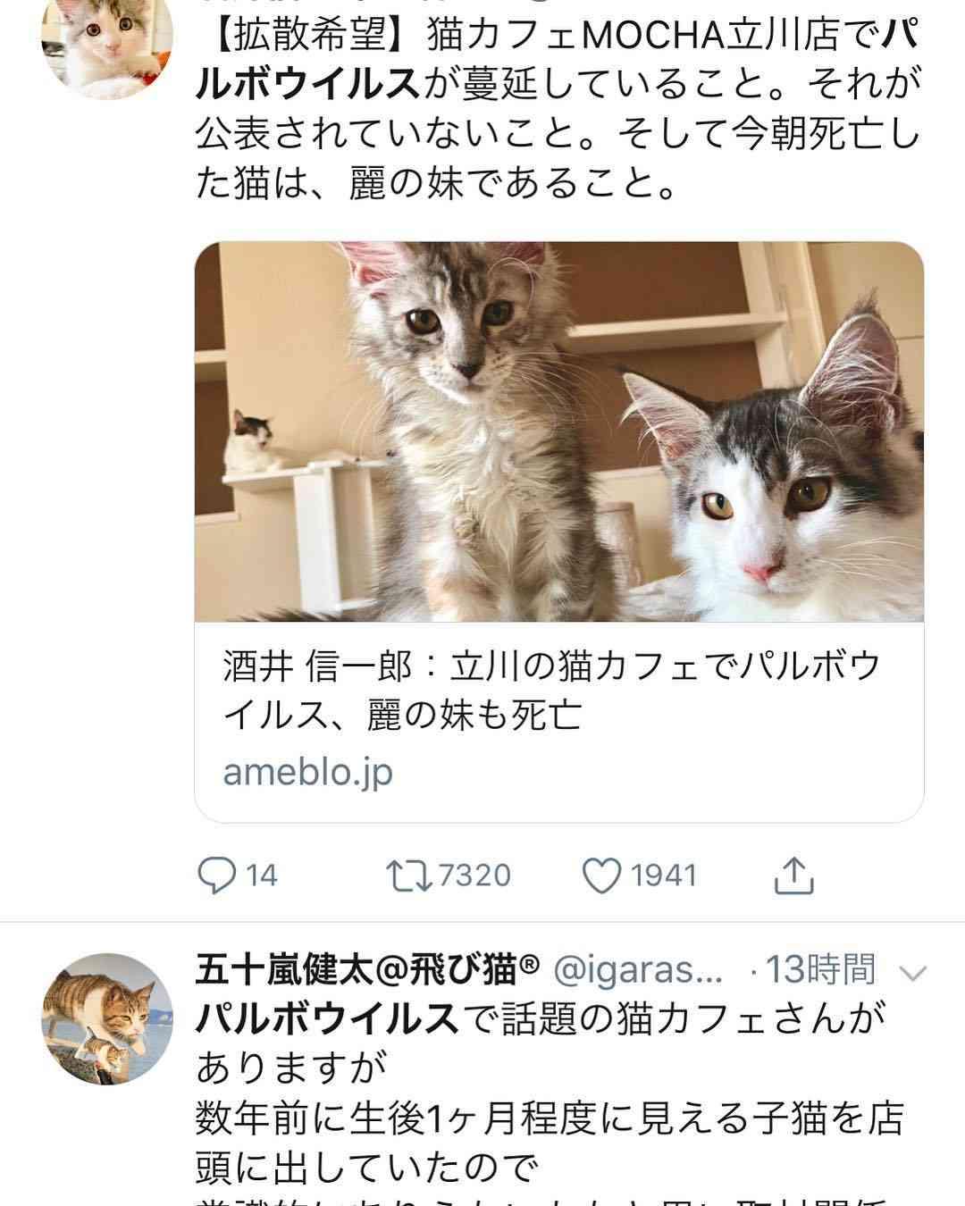 """でめるねこ on Instagram: """"都内の猫カフェでパルボウイルスが蔓延して猫たちが次々と死んでいるニュース!それが猫カフェmochaときいて納得してしまった! . 猫カフェmochaは全国にたくさんあって、前心斎橋店に行ったことがあるけど、酷かった。…"""""""
