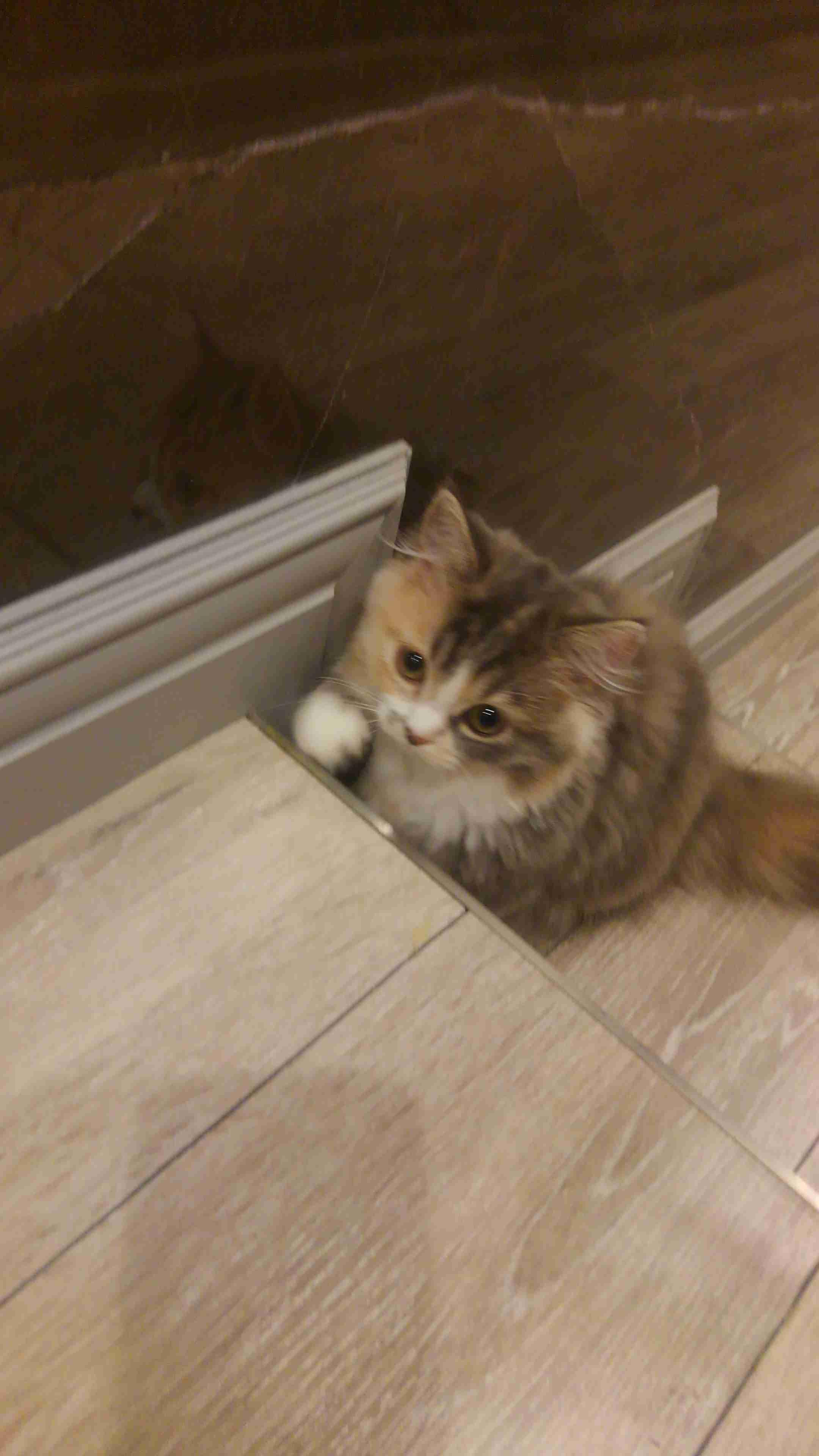 立川の猫カフェが臨時休業 ネットにはパルボウイルス感染との告発も 店に真偽を確認するも「わかる者がいない」