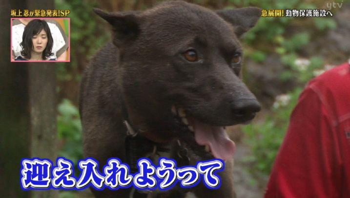 坂上忍、消えた義足の愛犬「飼育放棄騒動」の真相を語った