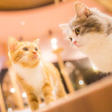 猫を飼ってる人の情報交換トピ