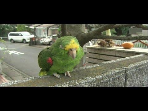 長寿な鳥の悩みを聞いて下さい。。 - YouTube
