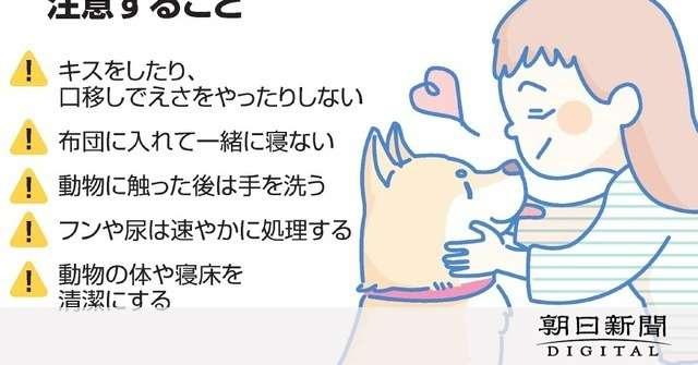 ペットとのキス、感染症リスクあり 猫と触れあい死亡も:朝日新聞デジタル