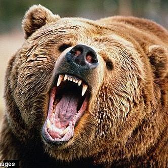 怖すぎる!日本・世界で起きた熊による9つの死亡事件 - NAVER まとめ