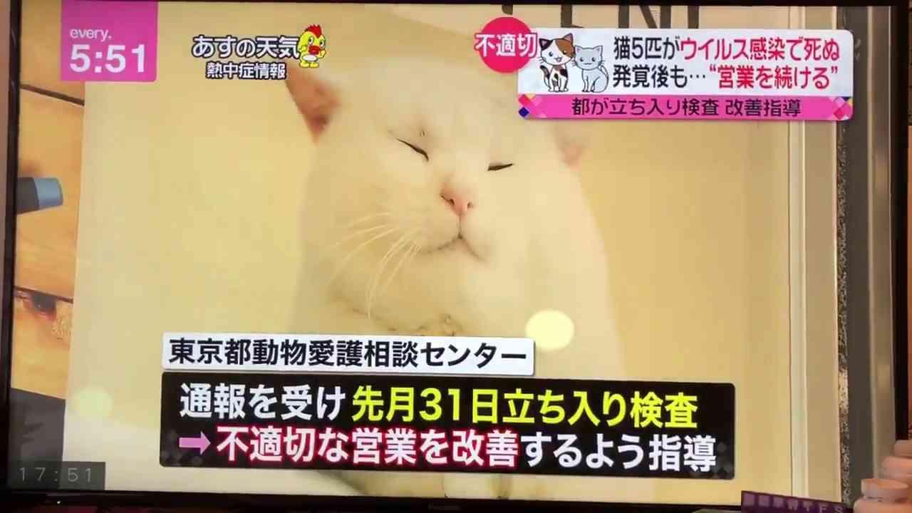 猫5匹がウイルス感染で死ぬ。発覚後も…営業を続ける - YouTube