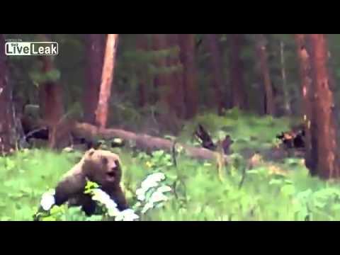 ロシア ハンター ライフル 熊 クマ ヒグマ グリズリー 速い 襲いかかってくる - YouTube