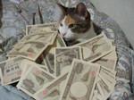 正社員の平均年収は442万円!昨年から4万円&3年連続マイナス…