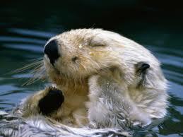 洗顔するラッコがものすごく可愛い