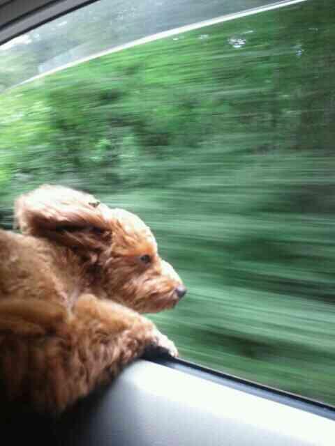 かぜ気持ちいいーーッ!車の窓から顔を出し風を感じまくるワンコたちが超ブサカワwwたまらんwww