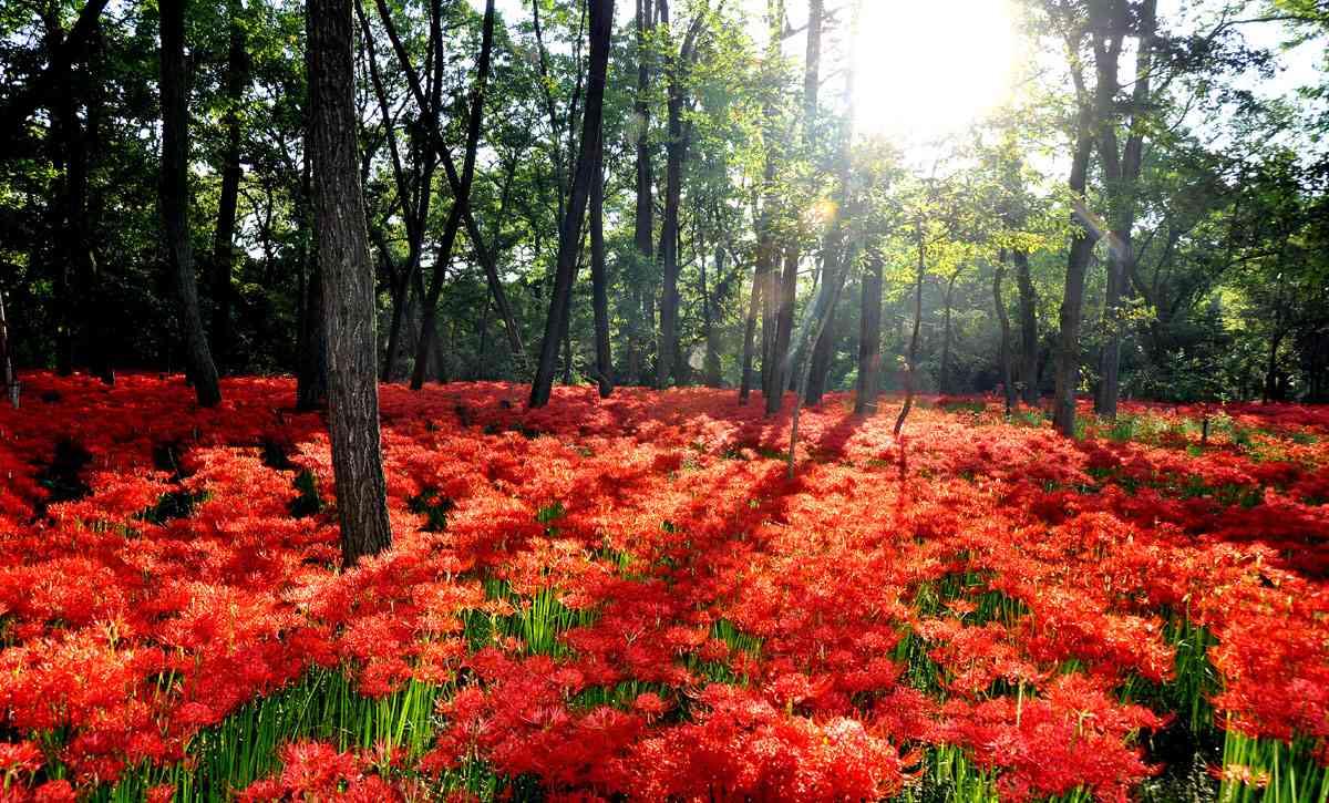 素晴らしすぎる自然や景色