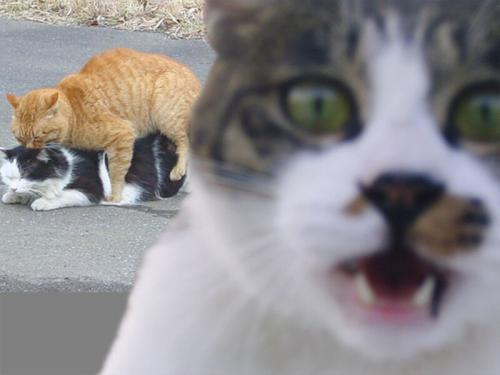 ちょっとシュールで笑える画像を貼るトピ