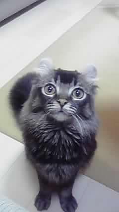 ペットを飼っている方、イチオシの写真を見せてください!