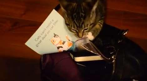 猫をターゲットに猫トイレの広告ダイレクトメールを送りつける業者、現る