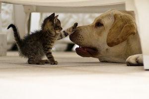 【超悲報】ネコに噛まれると「うつ病になる可能性」が明らかに!米国の研究者が関連性を発表